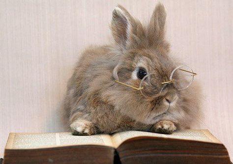 rabbit-book-glasses